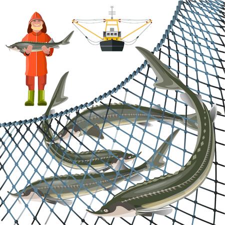 Set of sturgeon fish with fisher, marine nets and fishing ship. Vector illustration isolated on white background Illustration