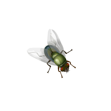 Realistic green fly insect. Vector illustration isolated on white background.