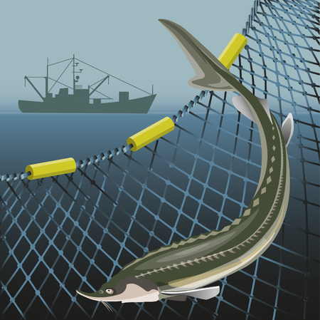 Sturgeon fish on the background of the marine nets and fishing ship. Sea landscape. Vector illustration