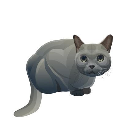 British shorthair blue cat sits in ambush. Vector illustration isolated on white background Stock Illustratie