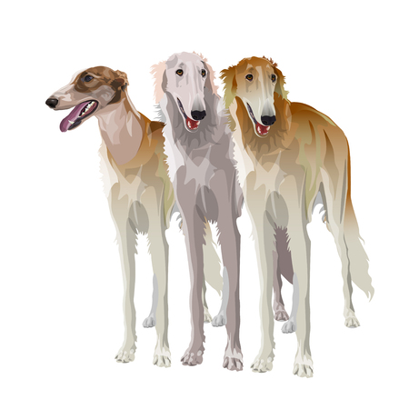 Three sighthound dogs in full growth. Borzoi or russian wolfhound. Vector illustration isolated on white background