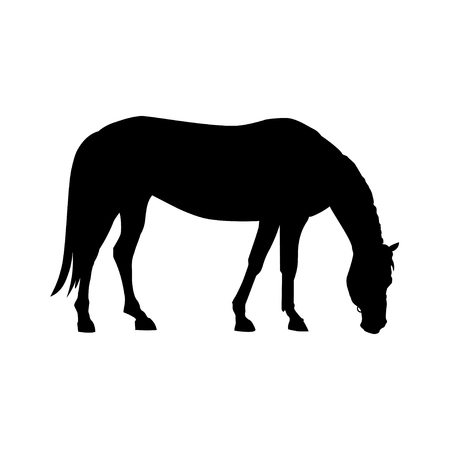 Silhouette of grazing horse. Vector illustration isolated on white background Çizim
