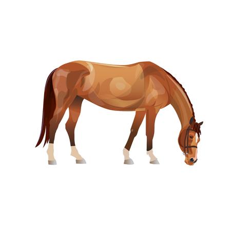 Grazing chestnut horse. Vector illustration isolated on white background Ilustração