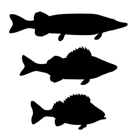 Silhouettes of freshwater predatory fish. Pike, zander, perch. Vector illustration isolated on white background