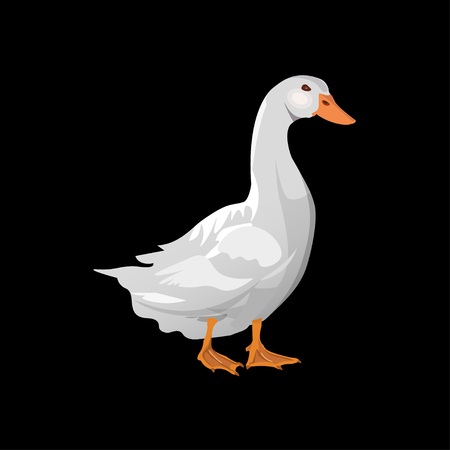 Domestic white duck. Vector illustration isolated on the black background