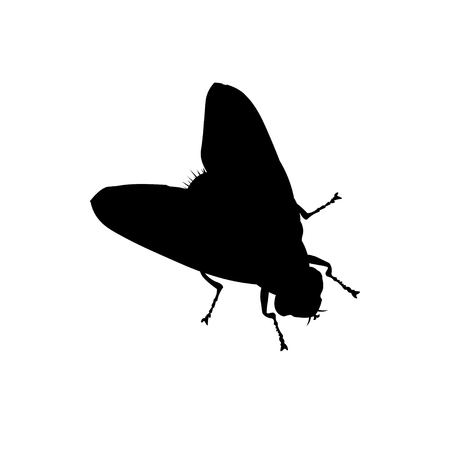 Silhouette of a fly. Vector illustration isolated on white background.