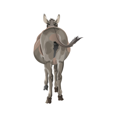 The donkey wags its tail. Back view. Vector illustration isolated on white background