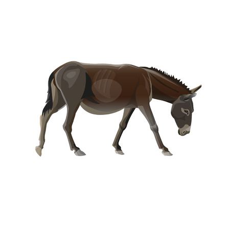 Donkey goes with the head down. Vector illustration isolated on the white background