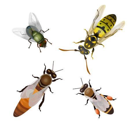 Zestaw latających owadów: pszczoły, mucha, osa. Ilustracja wektorowa na białym tle. Ilustracje wektorowe