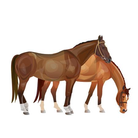 Due cavalli al pascolo. Illustrazione vettoriale isolato su sfondo bianco Vettoriali