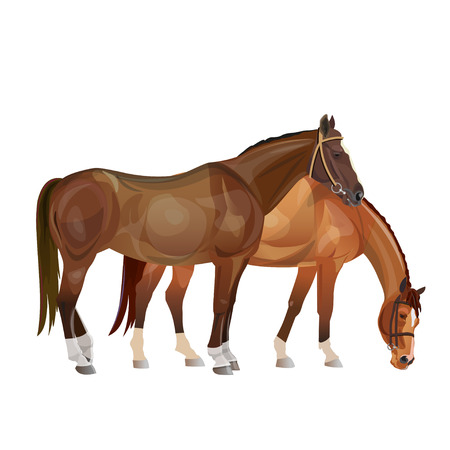 Two horses grazing. Vector illustration isolated on white background