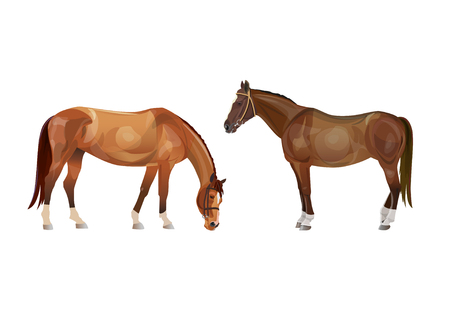Two riding horses. Vector illustration isolated on white background