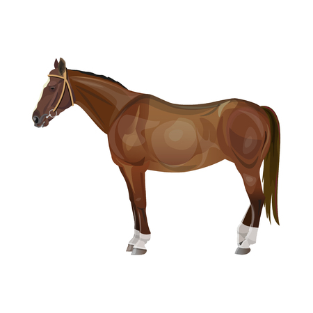 Riding chestnut horse standing. Vector illustration isolated on white background