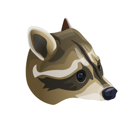 Raccoon head portrait. Vector illustration isolated on white background