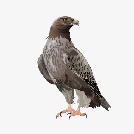 Golden eagle sitting. Vector illustration isolated on the white background