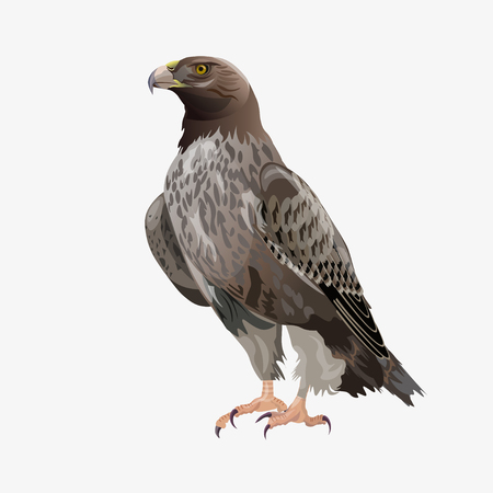 Golden eagle sitting. Vector illustration isolated on the white background  イラスト・ベクター素材