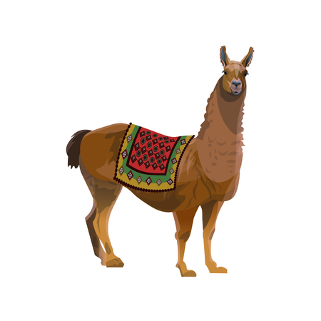Llama with a traditional colored blanket. Vector illustration isolated on white background