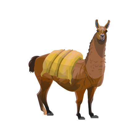Llama carrying heavy load. Vector illustration isolated on white background Illustration