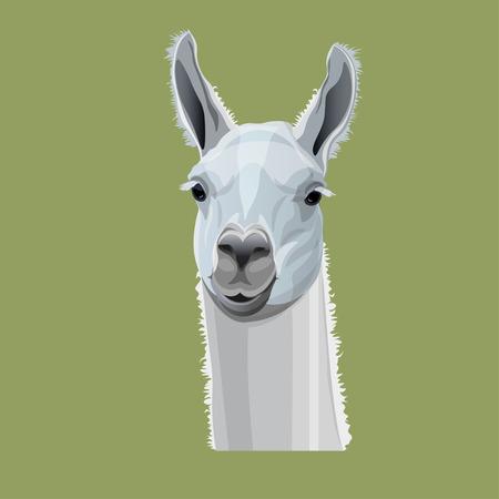 Llama head portrait. Vector illustration isolated on gray background  イラスト・ベクター素材