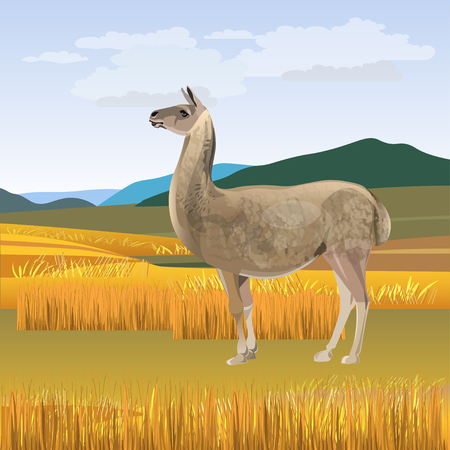 LLama grazing against the background of mountains . Vector illustration