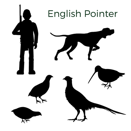 Set of vector silhouettes with English pointer and feathered game hunting. Vector illustration isolated on white background