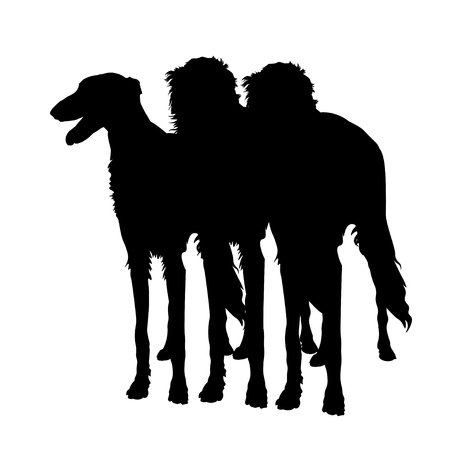 Silhouettes of three sighthound dogs in full growth. Borzoi or russian wolfhound. Vector illustration isolated on white background