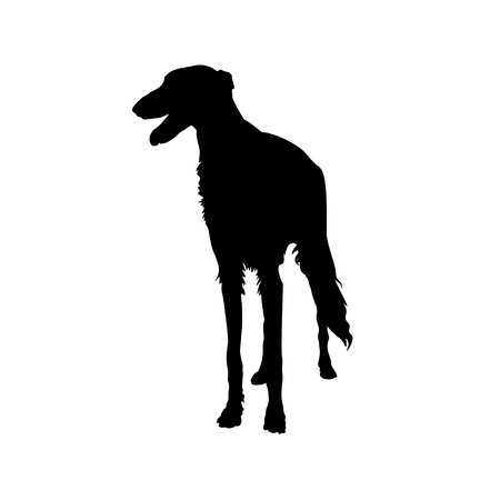 Silhouette of sighthound dog, front view. Vector illustration isolated on white background