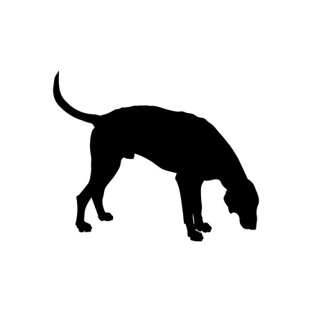 Silhouette of sniffing hunting dog. Scent hound sideways in full growth. Vector illustration isolated on white background Ilustração