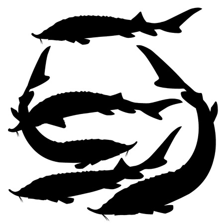 Set of silhouettes of sturgeon fishes. Vector illustration isolated on white background