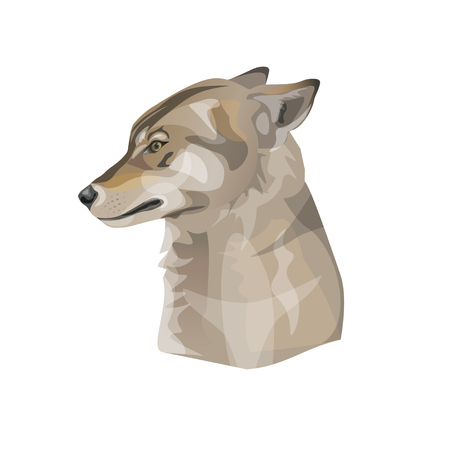 The head of terrified wolf with pressed back her ears. Vector illustration Illustration