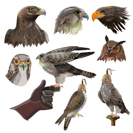Birds of prey and falconry. Set of vector illustration isolated on white background.