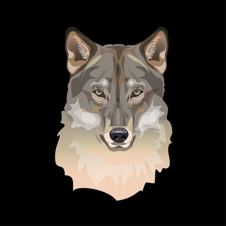 Portrait of wolf head. Vector illustration isolated on black background  イラスト・ベクター素材