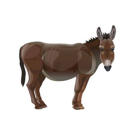 Donkey standing, side view. Vector illustration isolated on the white background