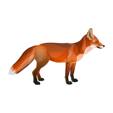 Standing red fox. Side view. Vector illustration isolated on white background Illustration