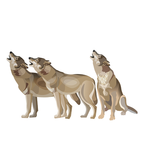 Wolf pack howling. Vector illustration isolated on white background  イラスト・ベクター素材