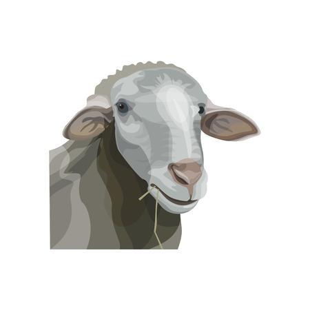 Sheep head portrait. Vector illustration isolated on white background Stock Illustratie