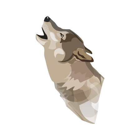 Portrait of a howling timber wolf. Vector illustration isolated on white background