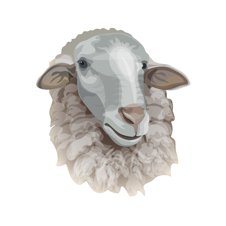 Sheep head portrait. Vector illustration isolated on white background Illustration