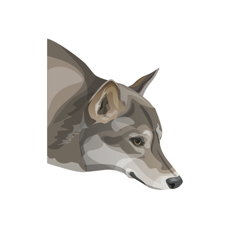 The head of gray wolf. Vector illustration isolated on white background