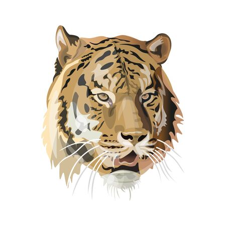 Tiger face image. Vector illustration isolated on the white background