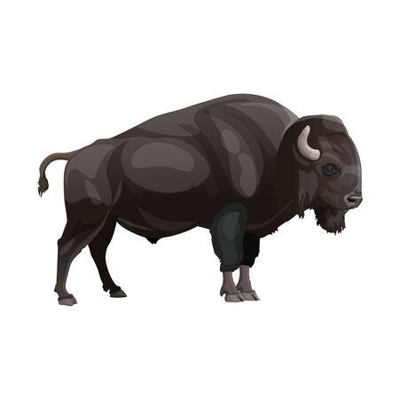 Bisonte europeo o saggio. Vista laterale. Illustrazione vettoriale isolato su sfondo bianco