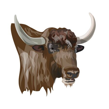 Portrait of domestic yak. Vector illustration isolated on white background