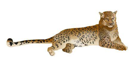 Leopard liegend. Vektor-Illustration isoliert auf weißem Hintergrund