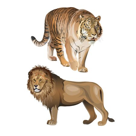 Predatory animals - lion and tiger. Vector illustration isolated on white background