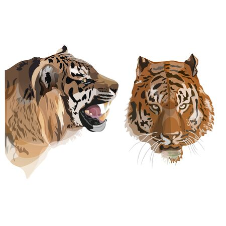Tiger face image. Front and side view. Vector illustration isolated on the white background