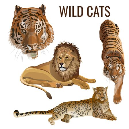 Wild cats. Set of predatory animals - lion, tiger, leopard. Vector illustration isolated on white background