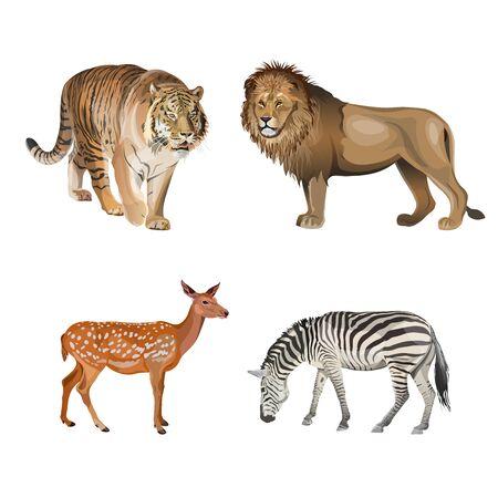 Animali della catena alimentare. Predatori ed erbivori. Tigre, leone, zebra e cervo. Illustrazione vettoriale isolato su sfondo bianco