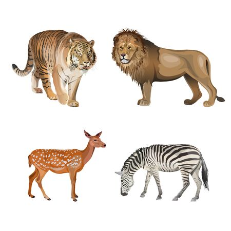 Food chain animals. Predators and herbivores. Tiger, lion, zebra and deer. Vector illustration isolated on white background
