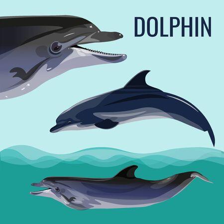 Dolphin set. Vector illustration isolated on blue background Illustration