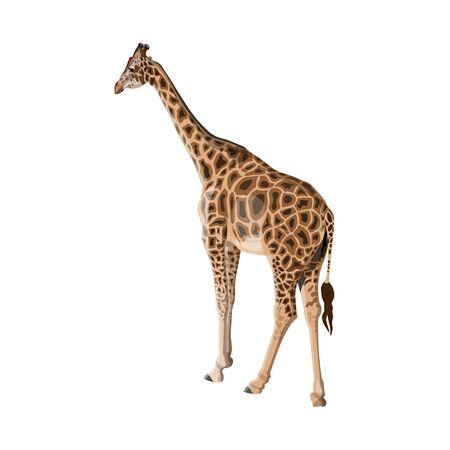 Giraffe isolated on white background. African animal, wildlife. Vector illustration Ilustrace
